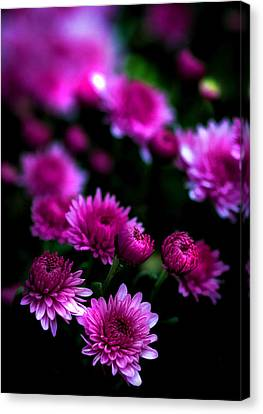 Pink Beauty Canvas Print by Cherie Duran
