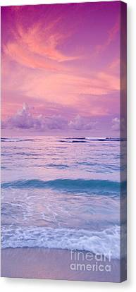 Pink Bliss -  Part 2 Of 3 Canvas Print by Sean Davey