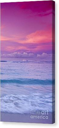 Pink Bliss -  Part 3 Of 3 Canvas Print by Sean Davey