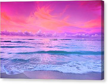Pink Bliss Canvas Print by Sean Davey