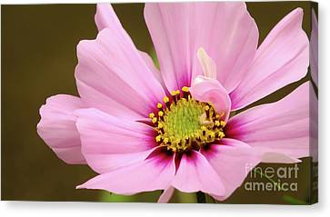 Pink Bloom Canvas Print by Chandra Nyleen