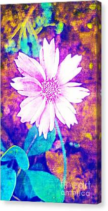 Pink Bloom Canvas Print by Rachel Hannah