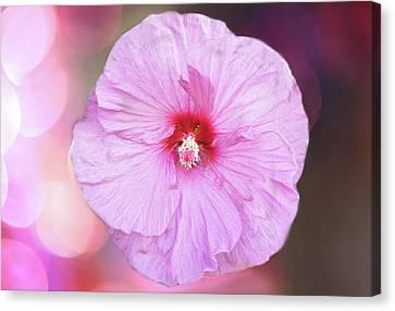 Close Focus Floral Canvas Print - Pink Blossom by Art Spectrum