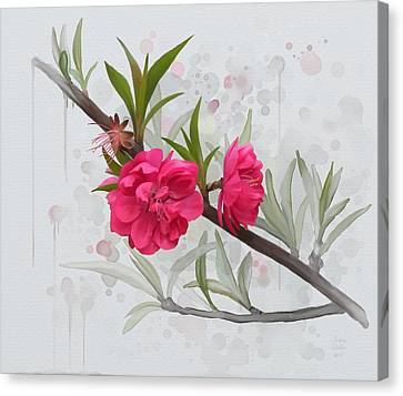Hot Pink Blossom Canvas Print by Ivana Westin