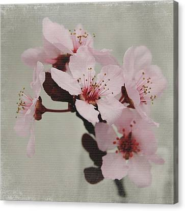 Pink Blossoms 1- Art By Linda Woods Canvas Print