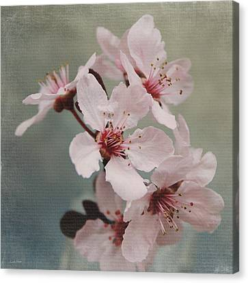 Pink Blossoms 2- Art By Linda Woods Canvas Print