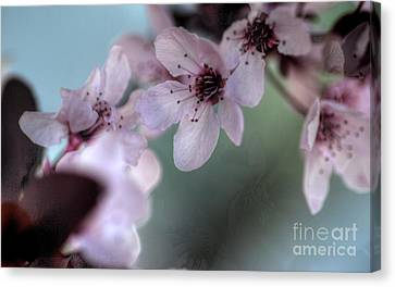 Canvas Print featuring the photograph Pink Blossoms by Jim and Emily Bush