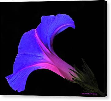 Pink Blue Flower Canvas Print by Chaza Abou El Khair