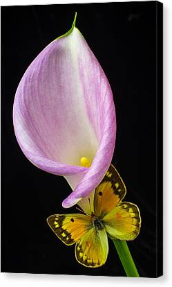 Pink Calla Lily With Yellow Butterfly Canvas Print by Garry Gay