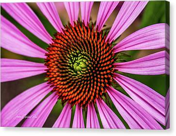 Canvas Print featuring the photograph Pink Cornflower by Joann Copeland-Paul