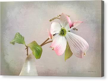 Pink Cornus Kousa Dogwood Blossom Canvas Print by Betty Denise