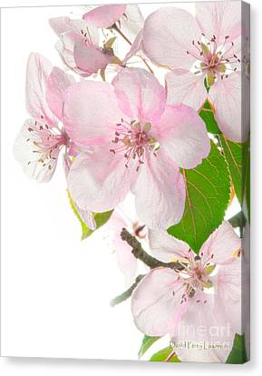 Canvas Print featuring the photograph Pink Crabapple Blissoms by David Perry Lawrence
