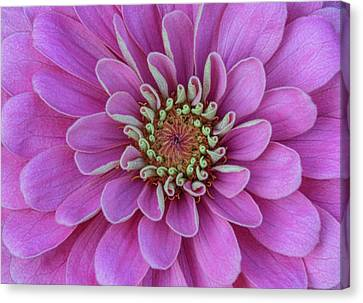 Canvas Print featuring the photograph Pink Dahlia by Dale Kincaid