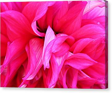 Canvas Print featuring the photograph Pink Dahlia by Kristin Elmquist