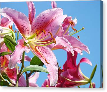 Pink Day Lilies Floral Art Prints Blue Sky Botanical Lilies Baslee Troutman Canvas Print by Baslee Troutman