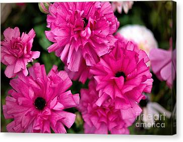 Canvas Print featuring the photograph Pink by Diana Mary Sharpton