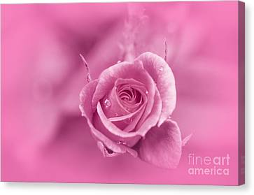 Pink Dream Canvas Print by Charuhas Images