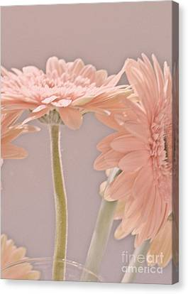 Pink Dreams Canvas Print by Traci Cottingham