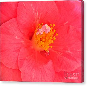 Canvas Print featuring the photograph Pink by Erica Hanel