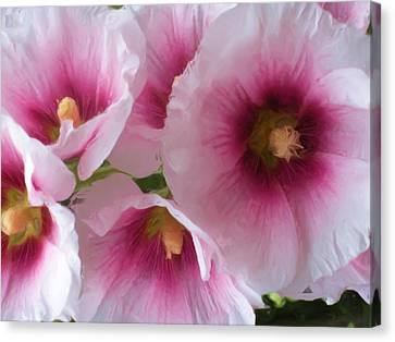 Pink-faced Hollyhocks Canvas Print