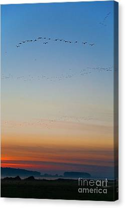 Pink Feet And Fog Canvas Print by John Edwards