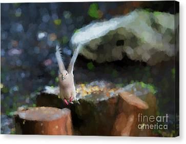 Pink Feet Canvas Print by Dan Friend