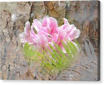 Canvas Print featuring the photograph Pink Flower Bark by Amanda Eberly-Kudamik