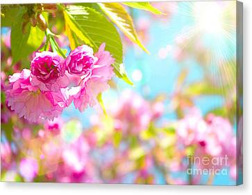 Pink  Flower Beautiful Canvas Print by Boon Mee