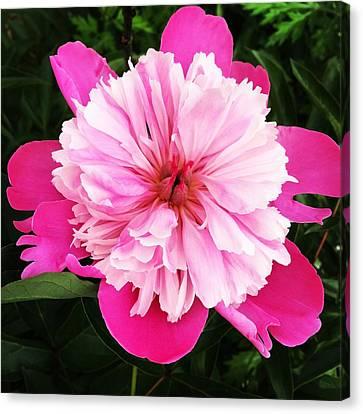Pink Flower Canvas Print by Carl Griffasi