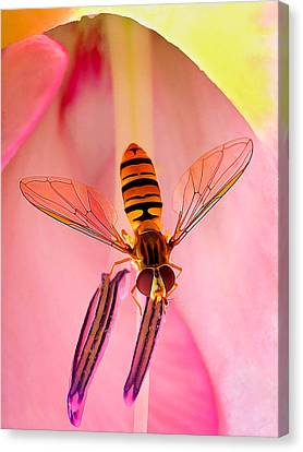 Abeautifulsky Canvas Print - Pink Flower Fly by ABeautifulSky Photography by Bill Caldwell