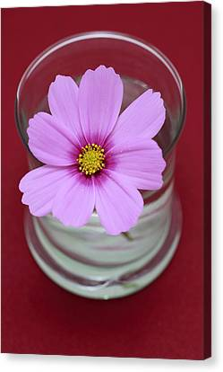 Pink Flower Canvas Print by Frank Tschakert