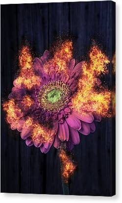 Combusting Canvas Print - Pink Flower In Flames by Garry Gay