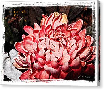 Canvas Print featuring the photograph Pink Flower by Joan  Minchak