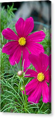 Pink Flower Canvas Print by Michael Bessler
