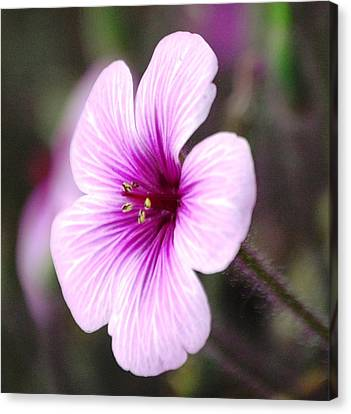 Canvas Print featuring the photograph Pink Flower by Sumoflam Photography