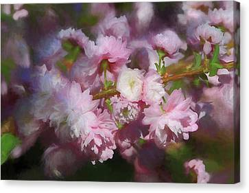 Canvas Print featuring the photograph Pink Flowering Almond by Donna Kennedy
