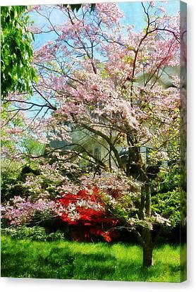 Azaleas Canvas Print - Pink Flowering Dogwood by Susan Savad