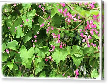 Canvas Print featuring the photograph Pink Flowering Vine1 by Megan Dirsa-DuBois