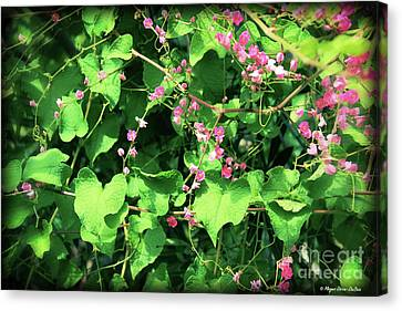 Canvas Print featuring the photograph Pink Flowering Vine2 by Megan Dirsa-DuBois
