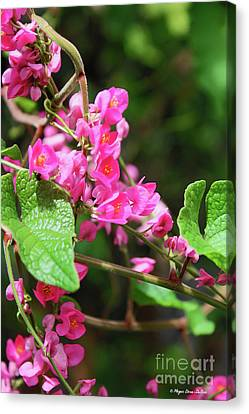 Canvas Print featuring the photograph Pink Flowering Vine3 by Megan Dirsa-DuBois