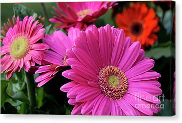 Pink Flowers Canvas Print by Brian Jones