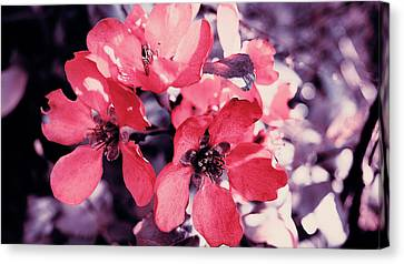Pink Flowers Canvas Print by Nat Air Craft