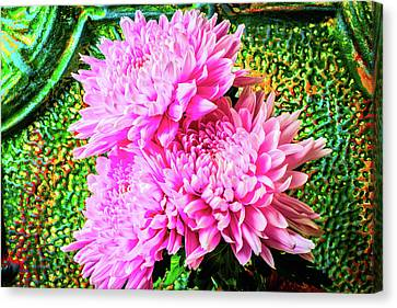 Pink Football Mums Canvas Print by Garry Gay