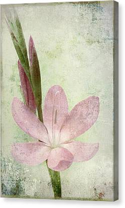 Pink Gladiolus On Green Canvas Print
