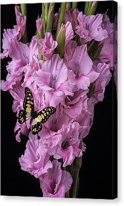 Pink Glads And Butterfly Canvas Print by Garry Gay