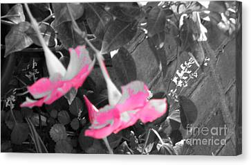 Pink Hats  Canvas Print by Cathy Dee Janes