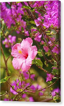 Pink Hibiscus And Bougainvillea Canvas Print by John Clark