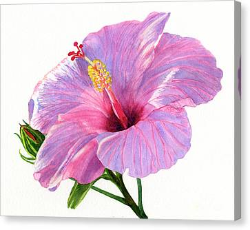 Hibiscus Canvas Print - Pink Hibiscus Blossom With Blue Shadows by Sharon Freeman