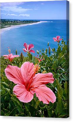 Pink Hibiscus Canvas Print by David Cornwell First Light Pictures Inc - Printscapes
