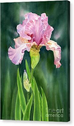 Pink Iris With Dark Background  Canvas Print by Sharon Freeman
